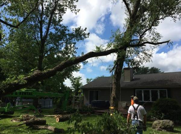 Tree Removal WI