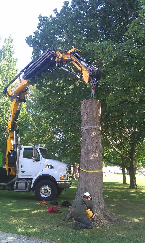 Stump Removal Franklin Tree Removal Milwaukee